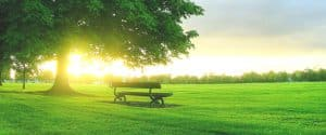 пейка на зелена ливада съзерцаваща вечността