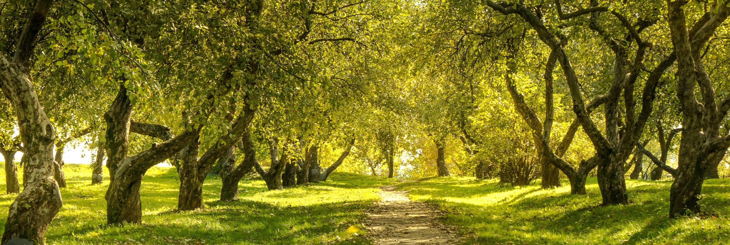 път из гората към вечността
